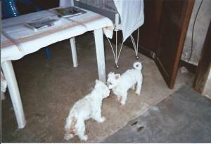 Sofia et Snoopy