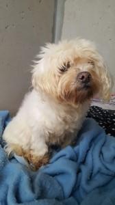 Utesse, adoptée en mars 2018