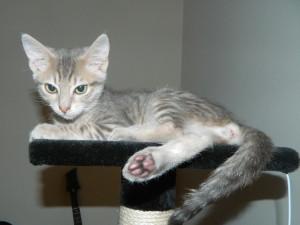 Cassy, adoptée en août 2018