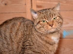 La chatte Béatrice