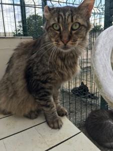 Fanchon, adopté en décembre 2016